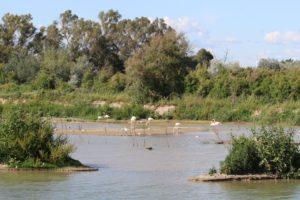 Aves acuáticas, Frutos de WorkingWithNature del Puerto de Sevilla