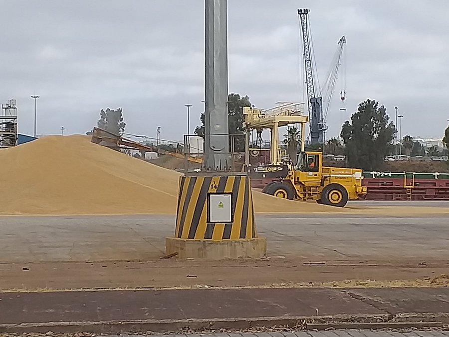 Iniciada la campaña de exportación de trigo duro.